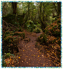Puzzlewood Autumn Photography