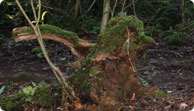 New features to find at Puzzlewood
