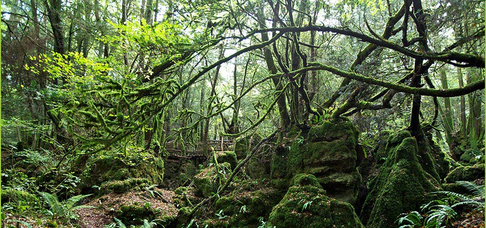 Puzzlewood is home to a wide variety of trees...