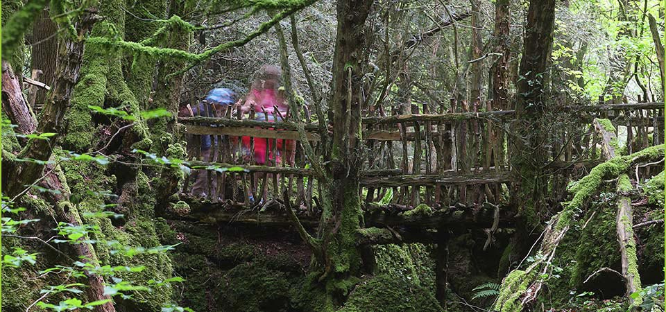 Puzzlewood will be open from the 11th - 19th February for half-term.